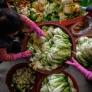 People prepare cabbages to make kimchi.