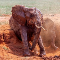 An unlikely eavesdropping technology could save the African elephants