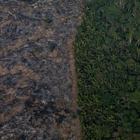 Amazon rainforest: The 2 actions that could reverse a terrible trend