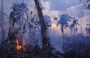 Amazon rainforst