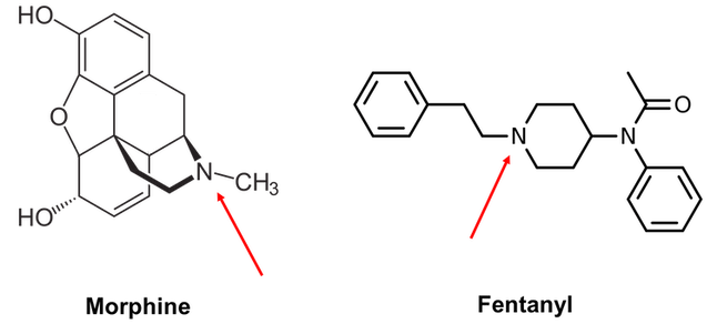 Morphine and fentanyl have different chemical structures but share a nitrogen group that undergo a similar chemical reaction in the bloodstream. Aaron Harrison, CC BY-ND