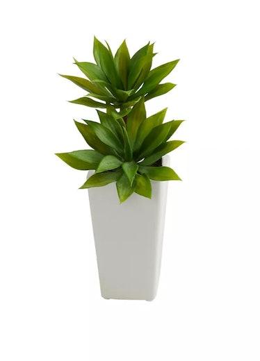Double Mini Agave Succulent in White Planter