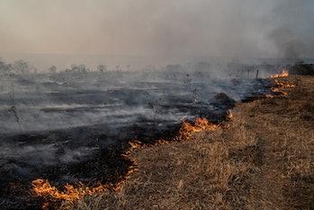 Forest fire in Brazilian Amazon