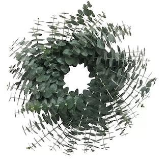 "Fresh Eucalyptus Wreath, 20"""