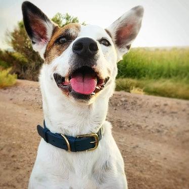 Tuff Pupper Classic Dog Collar