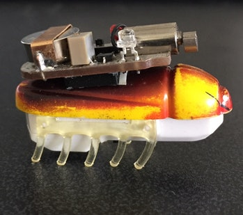 robot bug with a light backpack