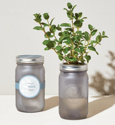 Garden Jars - Herbs