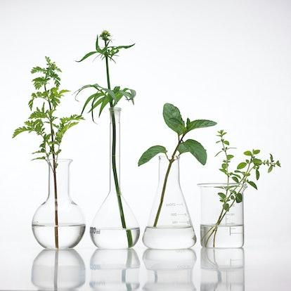 Plants in beakers