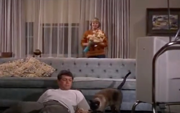 'That Darn Cat!' is a movie from 1965.