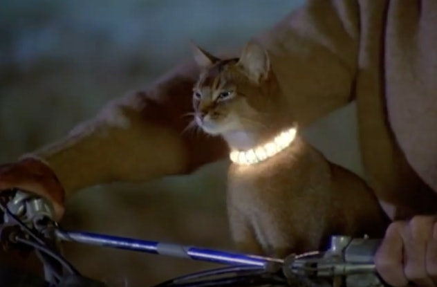 'The Cat From Outer Space' is a Disney movie from the 70's.