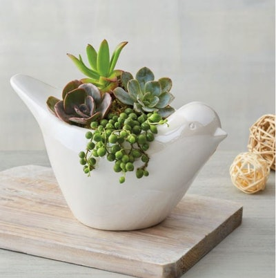 succulents in dove planter