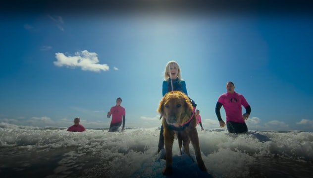 Superpower Dogs explores the incredible jobs working dogs do for people.