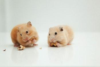 mice eating