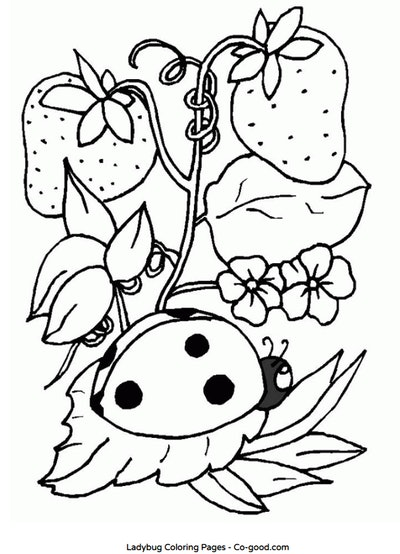 ladybug with strawberries coloring page