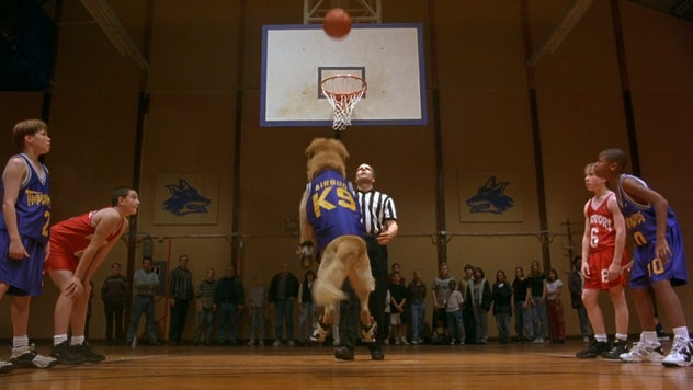 Air Bud launched a franchise of follow-up movies