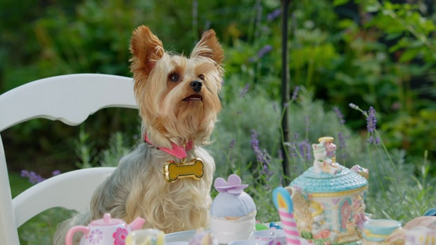 Pup Star is a movie about singing dogs