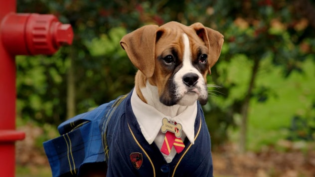 Pup Academy is a series about a secret school for dogs.
