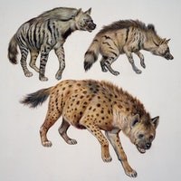 How does childhood affect your life? What hyenas can teach humans