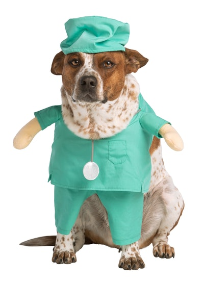 Dog in doctor costume