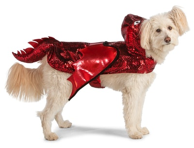 Small dog dressed in dragon costume with red sequins