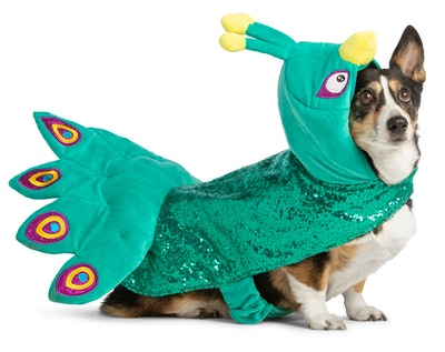 Dog wearing peacock Halloween costume