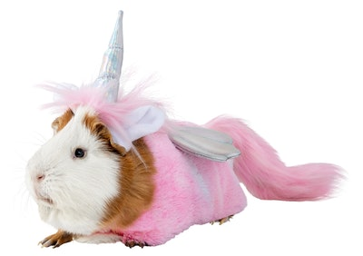 Guinea pig  in unicorn costume for small pets