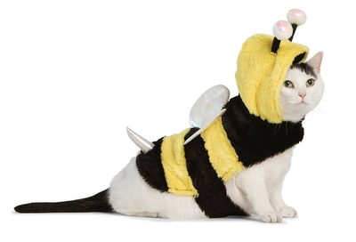 cat dressed up in bumblebee costume
