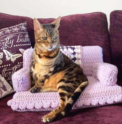 Tom Daley's crochet cat couch