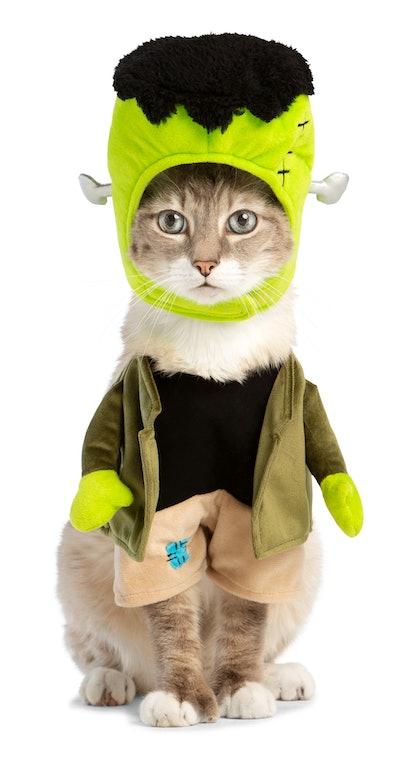 cat dressed up in Frankenstein Halloween costume
