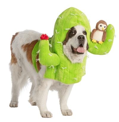 Dog Halloween costume; dog dressed up as cactus