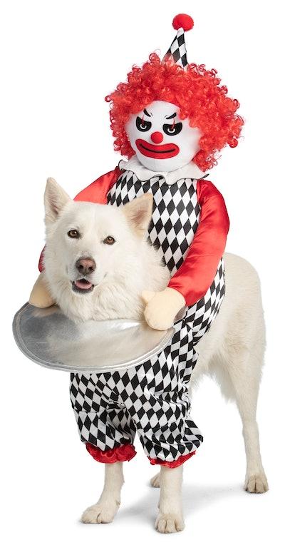 Dog wearing creepy clown costume