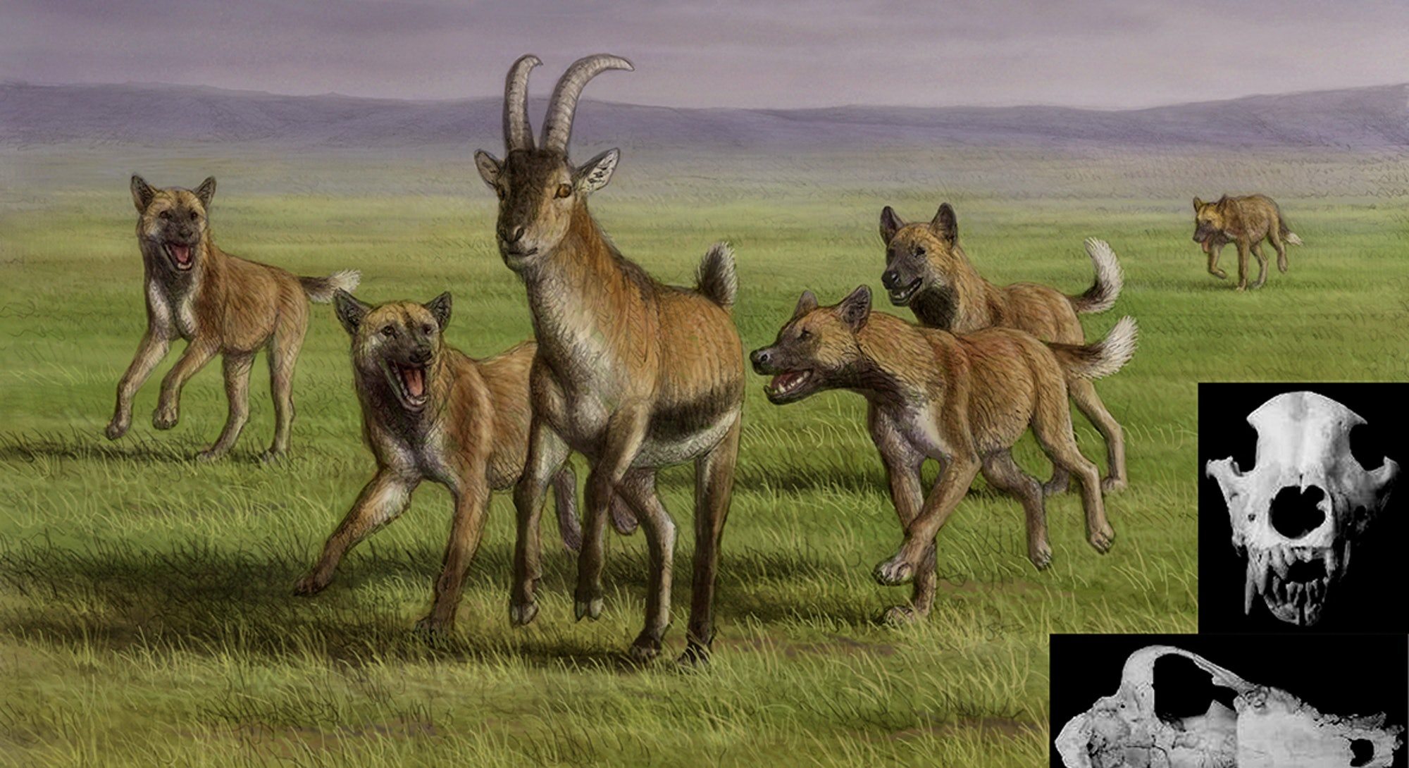 Artist's impression of the ancient dogs