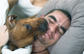 Dog and man sleeping in bed