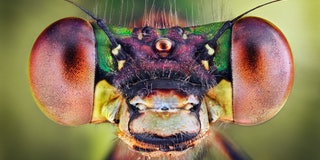 Insect closeup