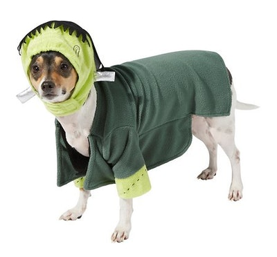 dog dressed as Frankenstein's monster for Halloween