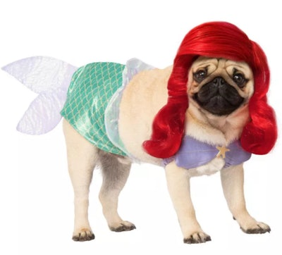 dog dressed as Ariel the mermaid for Halloween