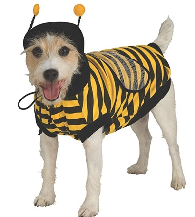 dog dressed in a bee costume