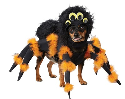 dog dressed in an orange and black spider costume for Halloween