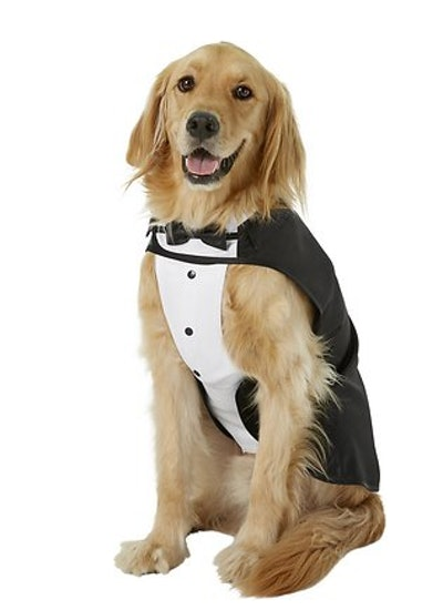 dog dressed in a tuxedo