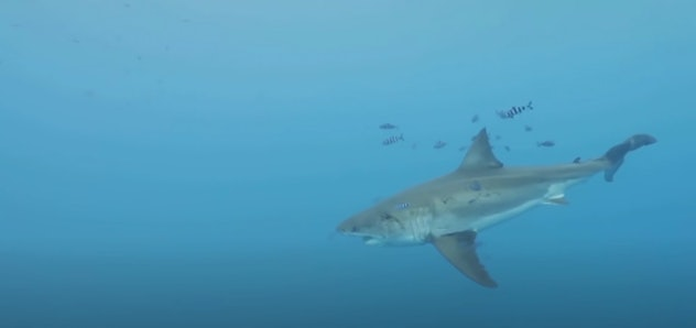 The National Geographic documentary, 'Sharks of Lost Island' is streaming on Disney+.