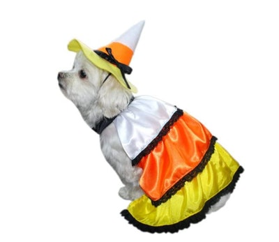 dog dressed in candy corn Halloween costume