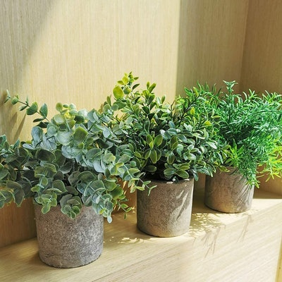 Winlyn Mini Potted Plants (3-Pack)
