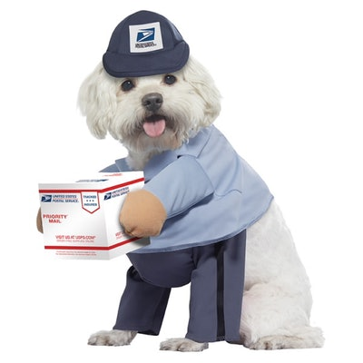 dog in a U.S. mail carrier Halloween costume holding a package