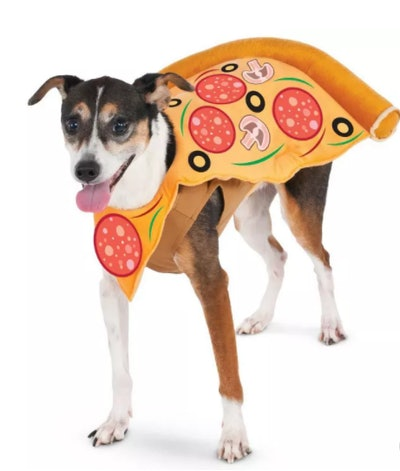 dog dressed in a pizza slice costume for Halloween