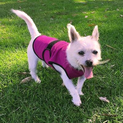 DOGZSTUFF Dog Cooling Vest