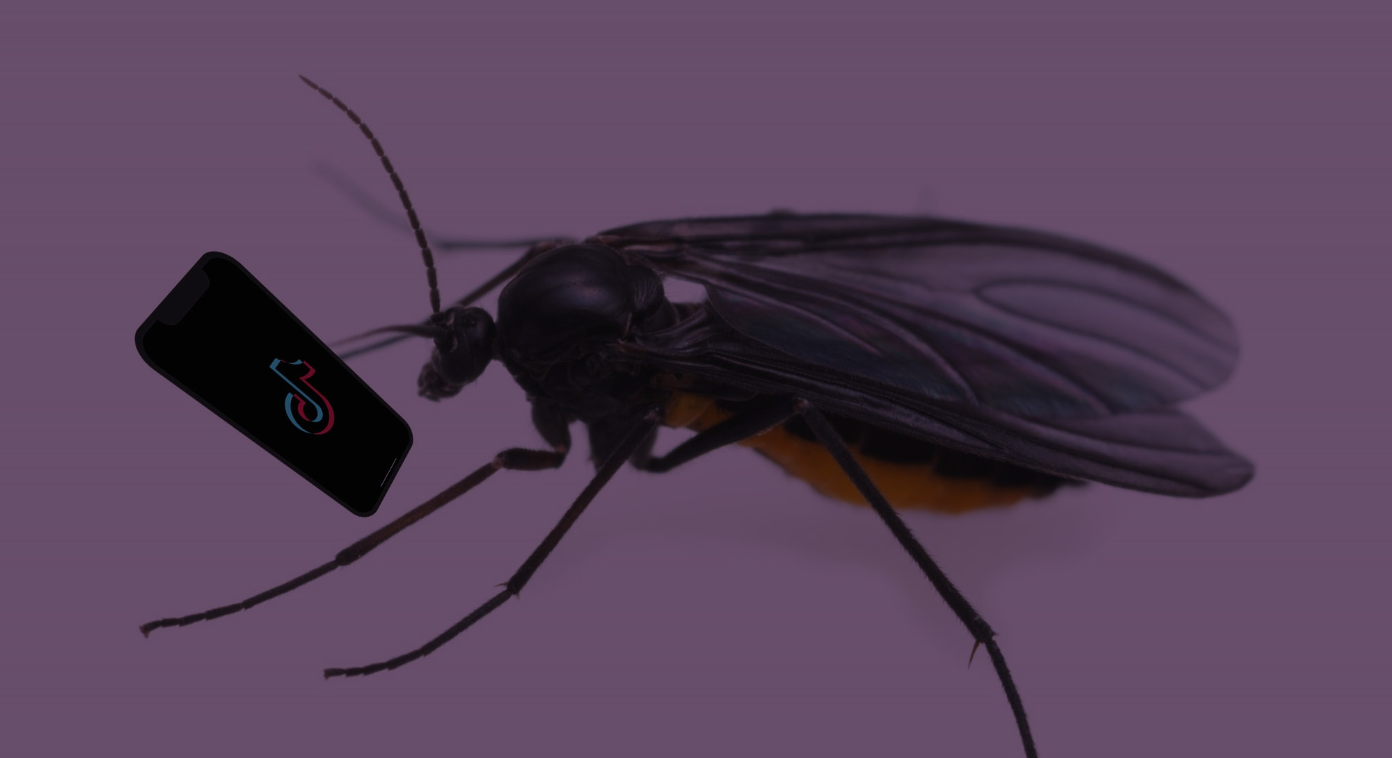 Photo illustration of a gnat looking at TikTok on its phone
