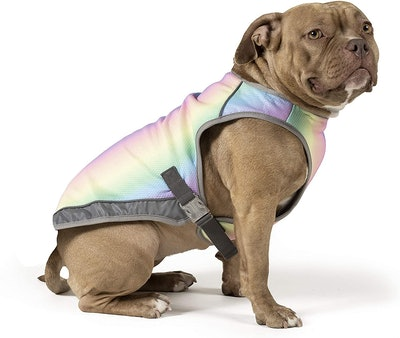 Canada Pooch Chill Seeker Dog Cooling Vest