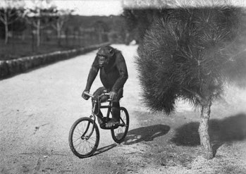 monkey biking
