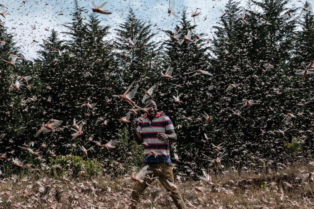 Man walking in locust swarm
