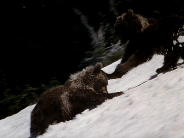 King of the Grizzlies was released in 1970